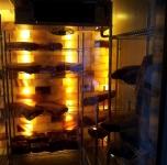 荷李活道 108號 加建及更改花灑,緊急燈照明系統,手提滅火器具(滅火筒) 12-05-2012